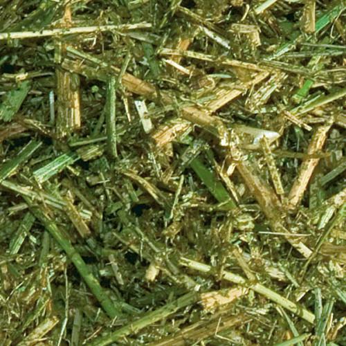 Basis Lusern – grovfoder som förlänger tuggtiden